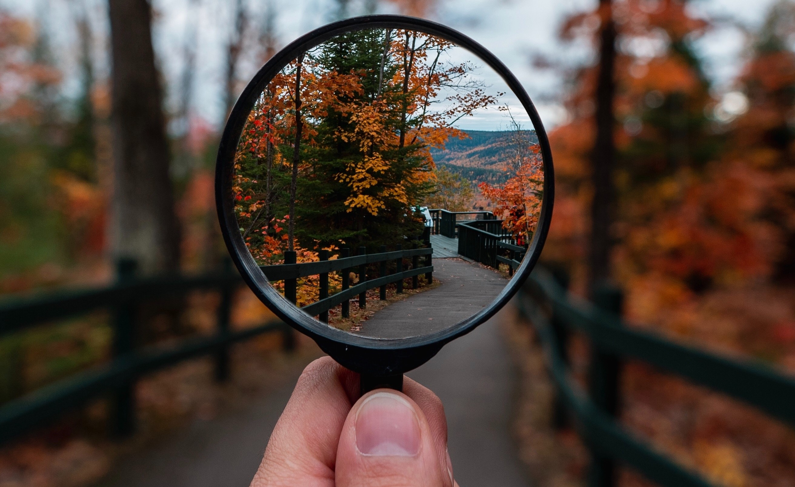 Magnifying glass showing tree lined path with rest of image out of focus.